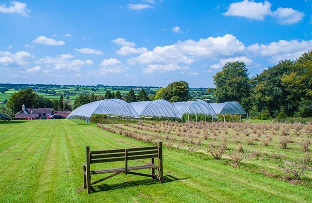 Royal Oak Farm pick-your-own fruit