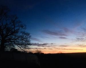 Royal Oak Fram sunset