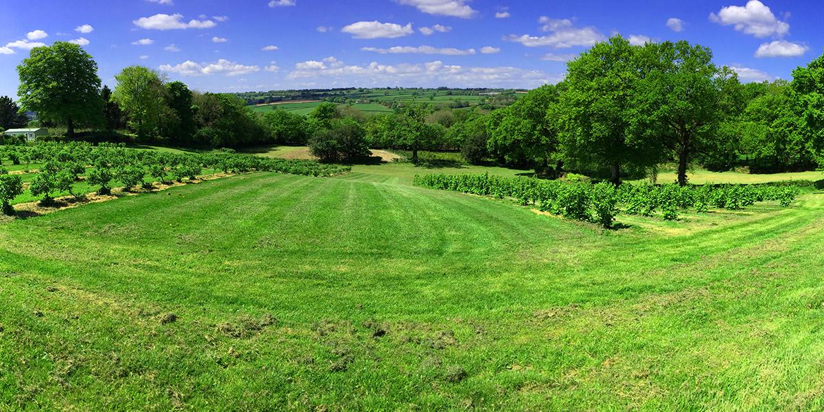 Royal Oak Farm glamping field