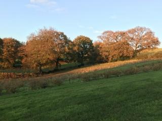Royal Oak Farm Autumn views