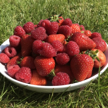 Strawberries and raspberries from royal oak farm