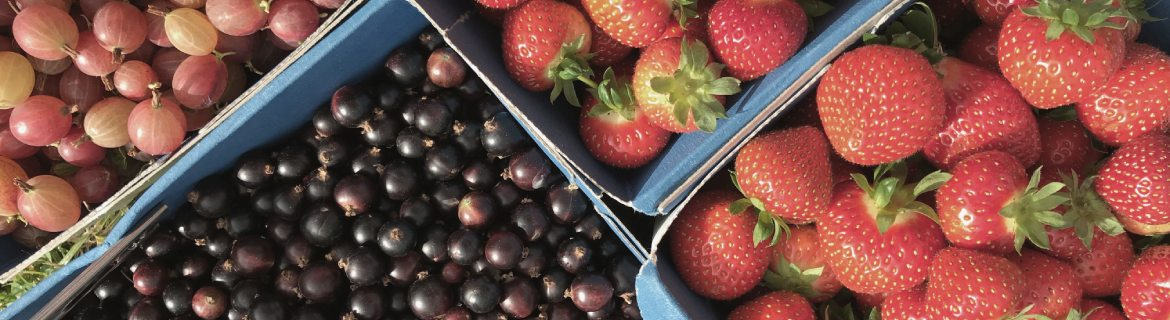 strawberries and blackcurrants at royal oak farm
