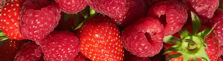 close up of strawberries and raspberries at royal oak farm
