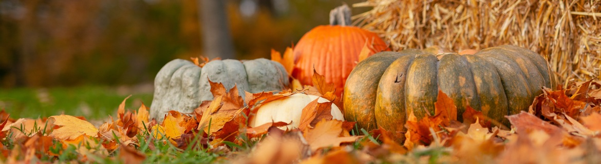 a variety of pumpkins in an autumnal setting of leaves and straw bales